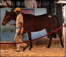 Placido in the KZN Yearling sales ring at Suncoast last year. He has had 6 starts, 2 wins and 4 places. Image: Candiese Marnewick/MMVII