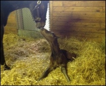Rachel Alexandra and her new colt