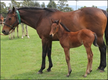 Extended Pregnancy Gestation In Mares