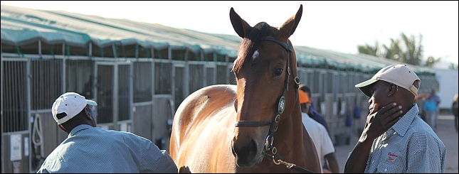 Suncoast KZN Yearling Sale Results Day One