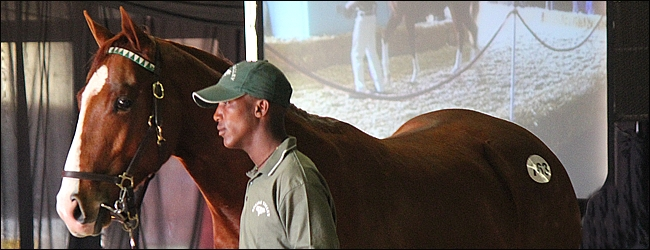 Wrap-Up Of A Scintilating Suncoast KZN Yearling Sale