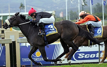 KZN-breds Become Stallion And Broodmare Of The Year - Cape Awards