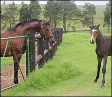 Rocky Street with his daughter out of Manzanilla by Martinelli. Image: Candiese Marnewick/MMVII