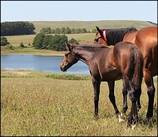 Camina Court (by Foveros) and foal