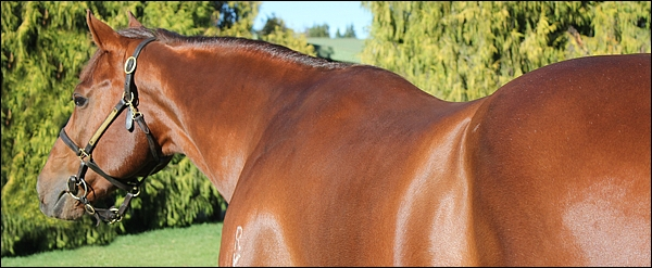 Strategic News(AUS) at Rathmor Stud. Image: Candiese Marnewick/MMVII.co.za