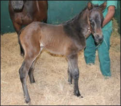 Day old colt by Strategic News