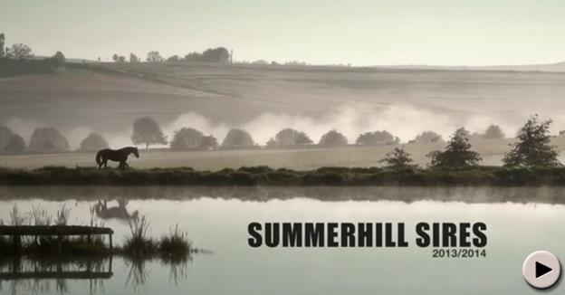 Summerhill Sires DVD 2013/2014