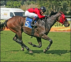 Crocodile Hunter winning at Clairwood, April '09. Image: Gold Circle