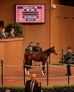 Noble Tune's Weanling Half-Sister Sells For $3-Million</i>