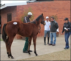 Kerry Jack, Brad and Mike McHardy looking at Lot 91, the Trippi colt prior to auction. Image: Candiese Marnewick