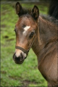 Colt by Var out of Clematis by Silvano. Image: Ian Todd
