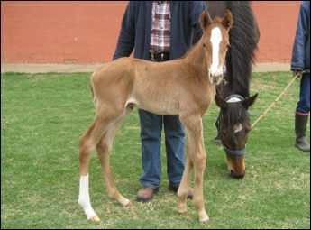 New Foals From Yellow Star Stud