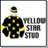 Yellow Star Stud's Suncoast KZN Yearling Sale Entrants